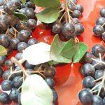 ARONIJA – Dobre i loše strane ove biljke