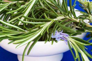 Ruzmarin (Salvia rosmarinus)