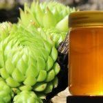 Čuvarkuća i med za lečenje hemoroida
